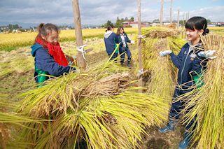 『穂仁王』を作って稲を乾燥させます。