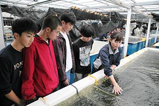 海ぶどうの養殖です