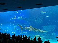 美ら海水族館の人気者